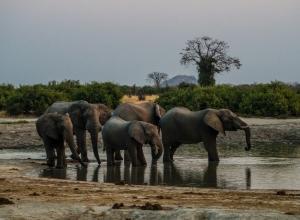 Elefanten beim abendlichen Wasserspaß