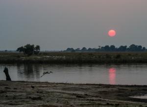 Morgenlicht am Chobe River mit Sattelstorch
