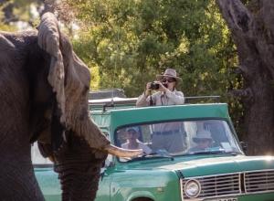 Auge in Auge mit dem Elefanten (1 von 1)