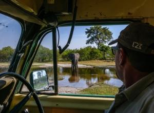 Mike und der Elefant (1 von 1)