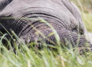 Wasser-Elefant (1 von 1)