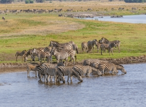 Zebra Crossing I (1 von 1)